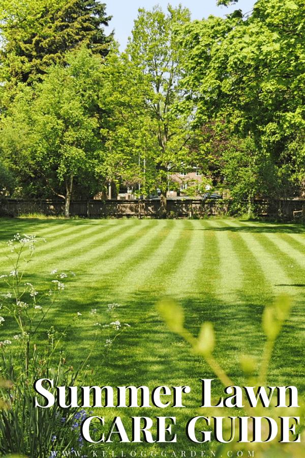 green summer lawn