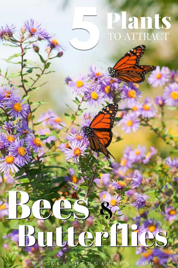 """Butterflies on purple flowers with text, """"5 plants to attract bees and butterflies"""""""