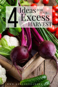 """Large harvest of carrots, cauliflower, beets, radishes and more with text, """" 4 ideas for your excess harvest"""""""