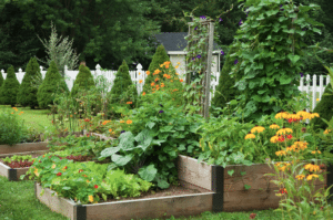 Companion planting for pollinators.