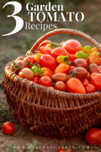 """Basket of cherry tomatoes with text, """"3 garden tomato recipes"""""""