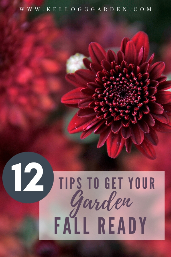 """Dark red mum flower with text, """"12 tips to get your garden fall ready"""""""
