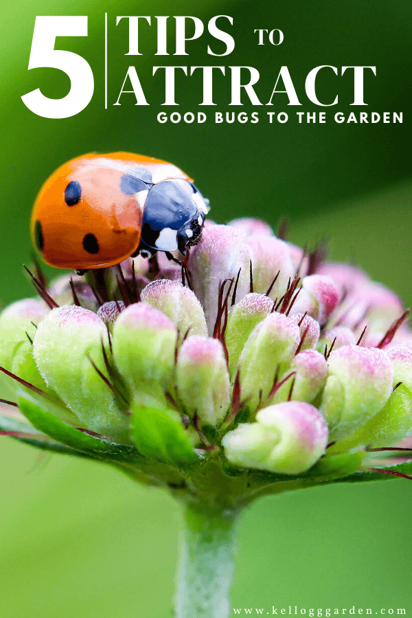 red ladybug on a light purple and green flower