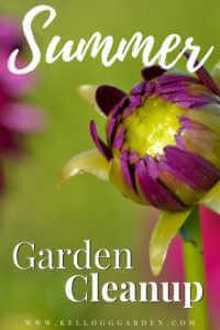 "Close purple mum with text, ""Summer garden cleanup"""
