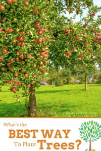 """Orange tree with text, """"What is the best way to plant trees?"""""""