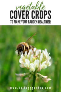 """Close up of a bee on a white flower with text, """"Vegetable Cover Crops to Make Your Garden Healthier"""""""