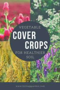 """4 photos in a collage of flowers and grains with text, """"Vegetable Cover Crops for Healthier Soil"""""""