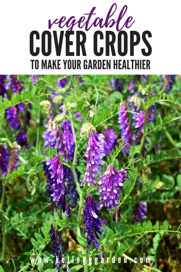 """Vetch Cover crop with text, """"Vegetable Cover Crop to make your garden healthier"""""""