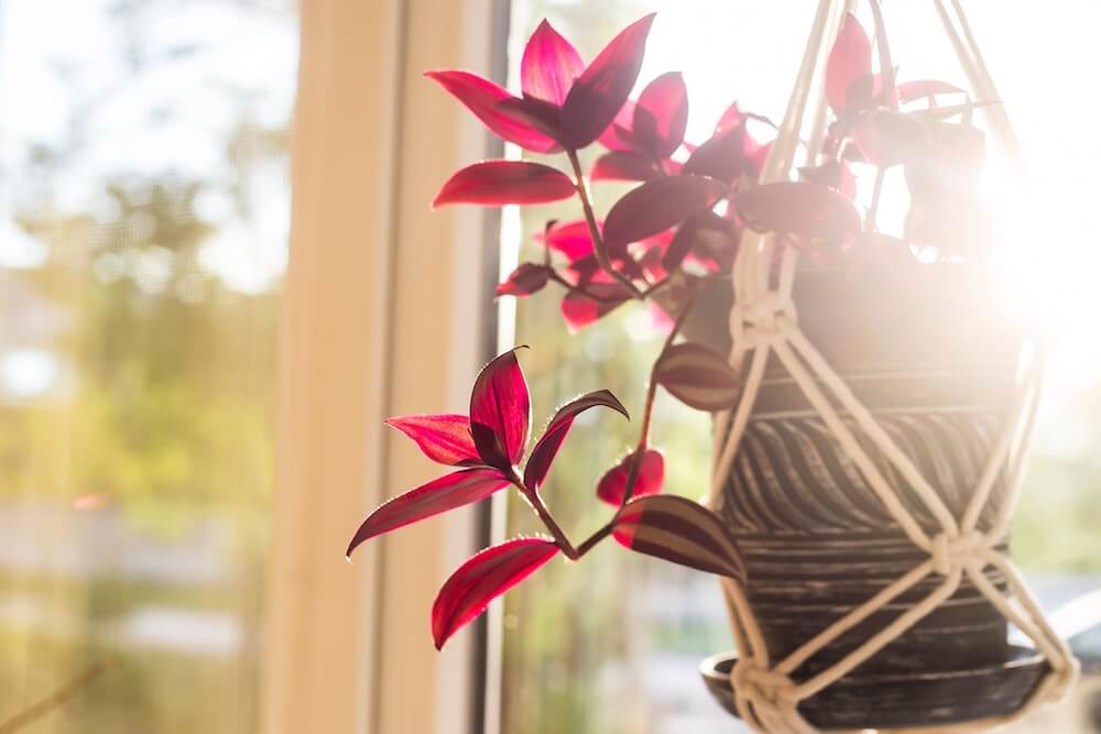 hanging red plant