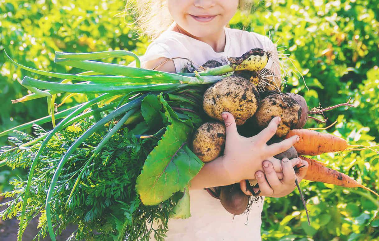 Child holding vegetable harvest