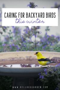 Backyard bird bath