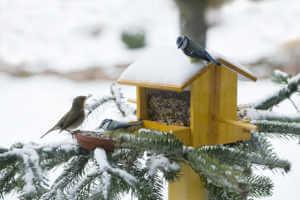 Bird feeder in snow