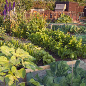 Vegetable community garden