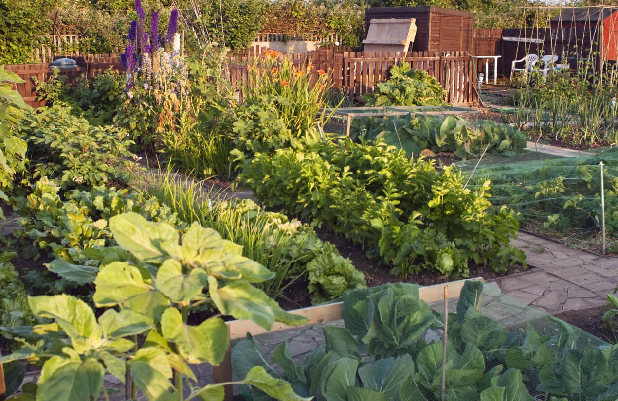 Vegetable community garden