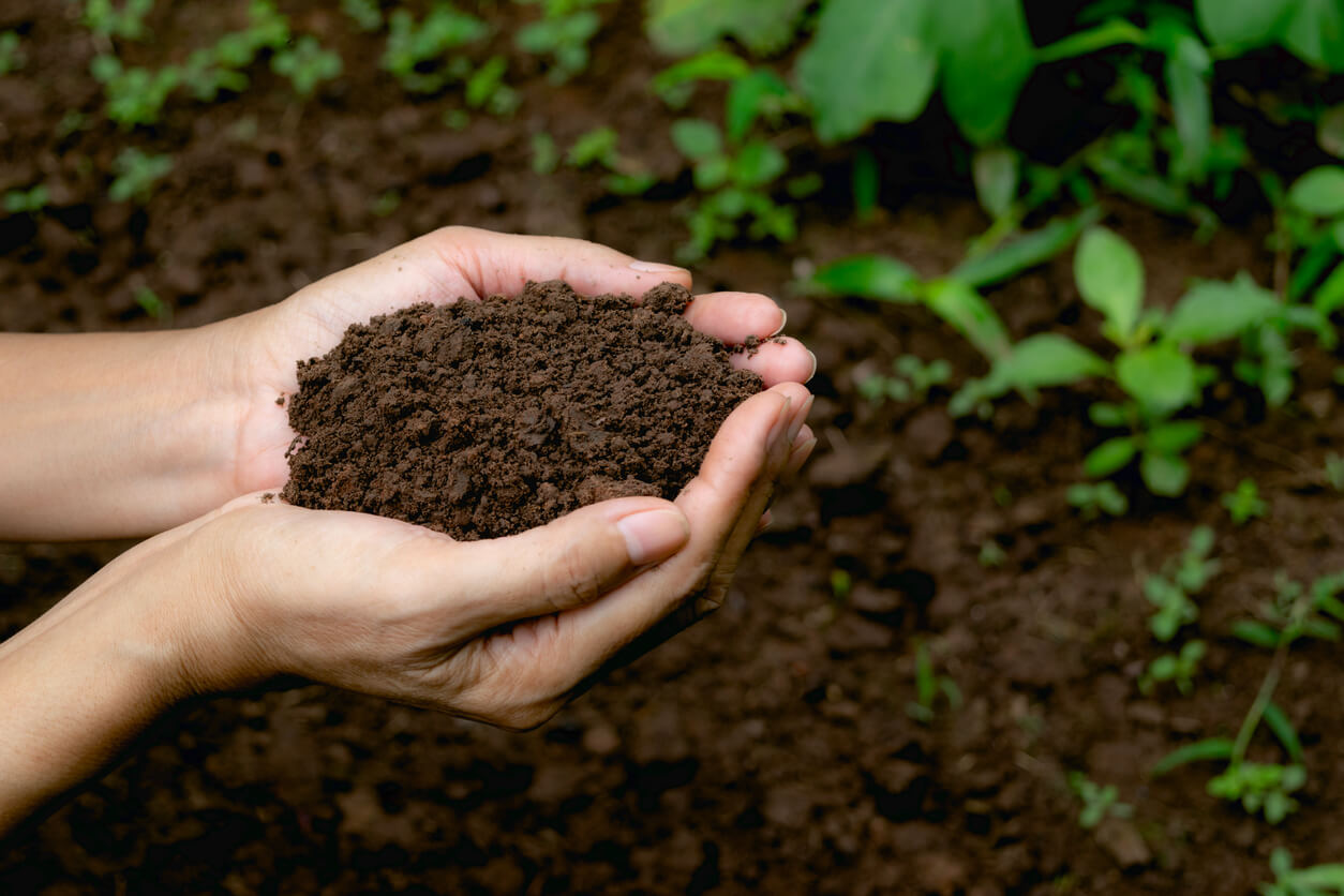 Hand holding healthy soil