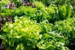 Fresh vegetables leaves
