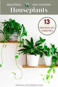 Indoor plants on shelves