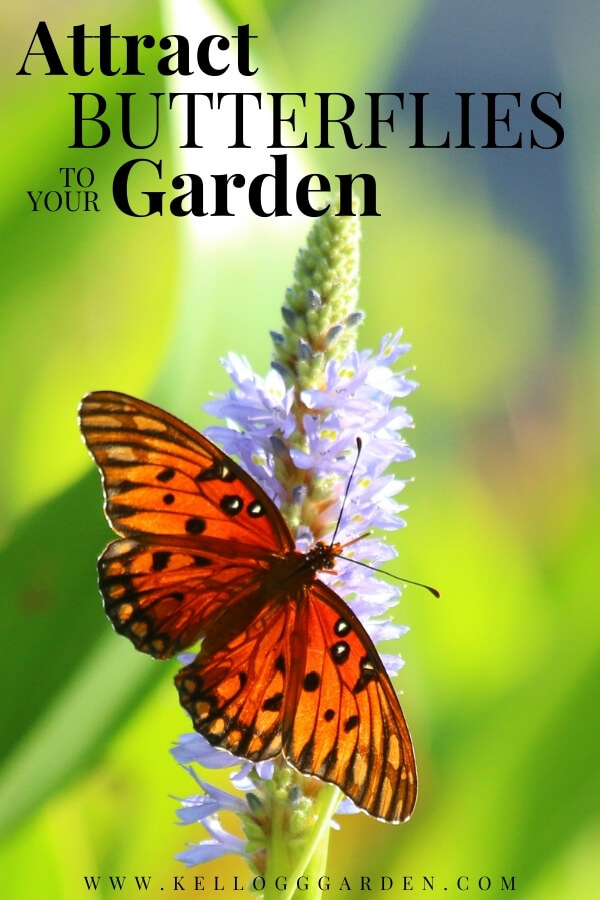 """Butterfly on purple flower with text, """"Attract butterflies to your garden"""""""
