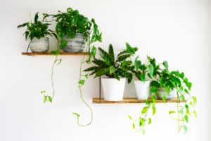 Potted Plants on shelfs