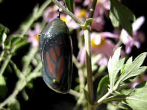 Butterfly in a cocoon surrounded by plants and purple flowers.