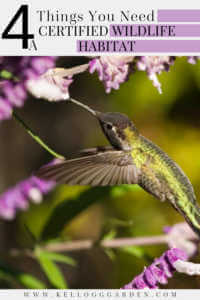 "Hummingbird feeding out of prple flower with text, ""4 Things you need, certified wildlife habitat"""