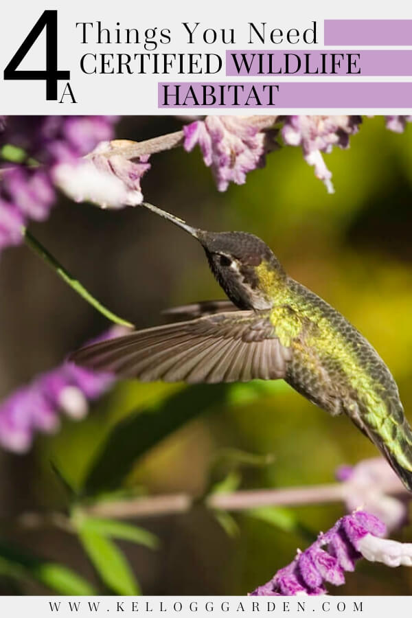 """Hummingbird feeding out of prple flower with text, """"4 Things you need, certified wildlife habitat"""""""