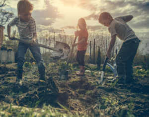 Kid helping in a garden by digging holes with shovels.