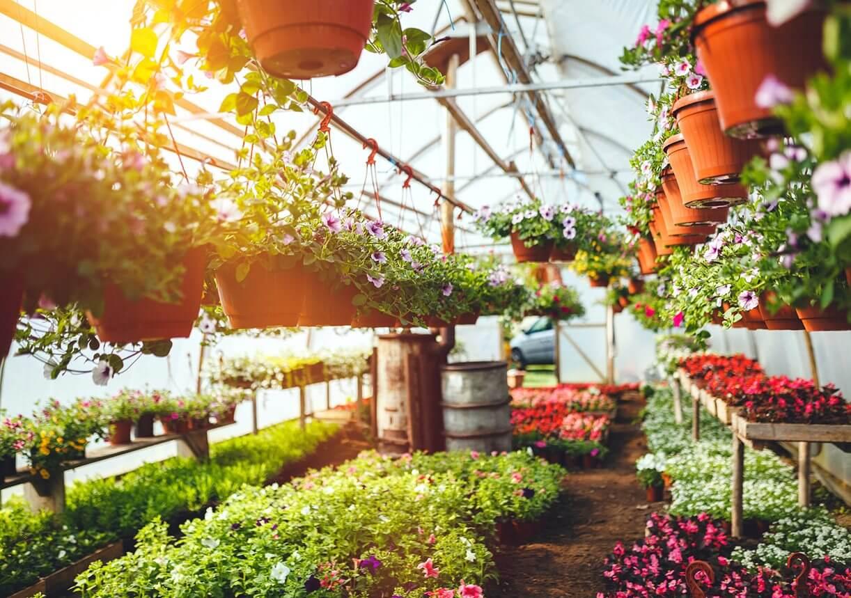 21 mar how to avoid spring garden fever - Garden Fever