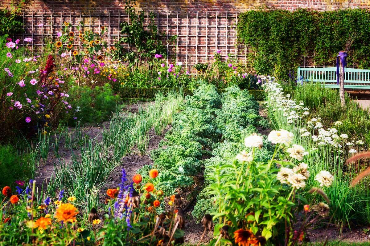 Herbs, flowers and vegetables in backyard formal garden.
