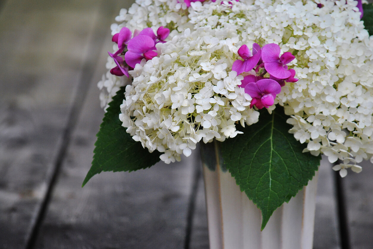 Hydrangea and sweet pea in vase