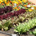 Vegetables to include in your garden checklist