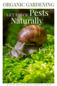 """Snail on moss with text, """"Organic gardening, get rid of pests naturally"""""""