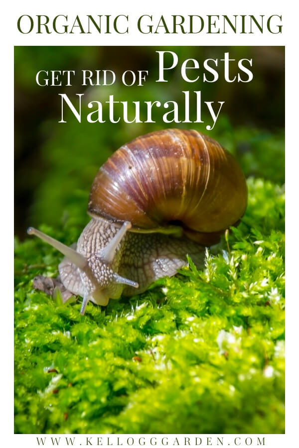 "Snail on moss with text, ""Organic gardening, get rid of pests naturally"""
