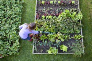 Using organic weed control