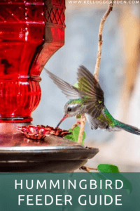 hummingbird feeding from red feeder pin image