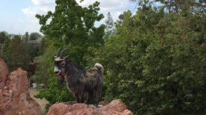 Kellogg Thunder Mountain Disney