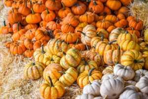 orange, yellow, and white mini pumpkins on hay