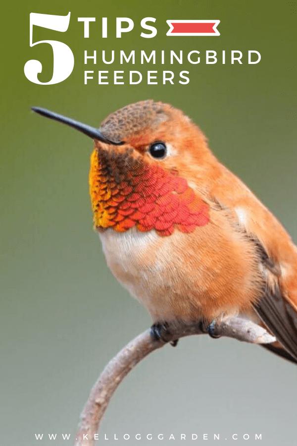 upclose orange hummingbird pin image