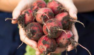 Organics builds life beets