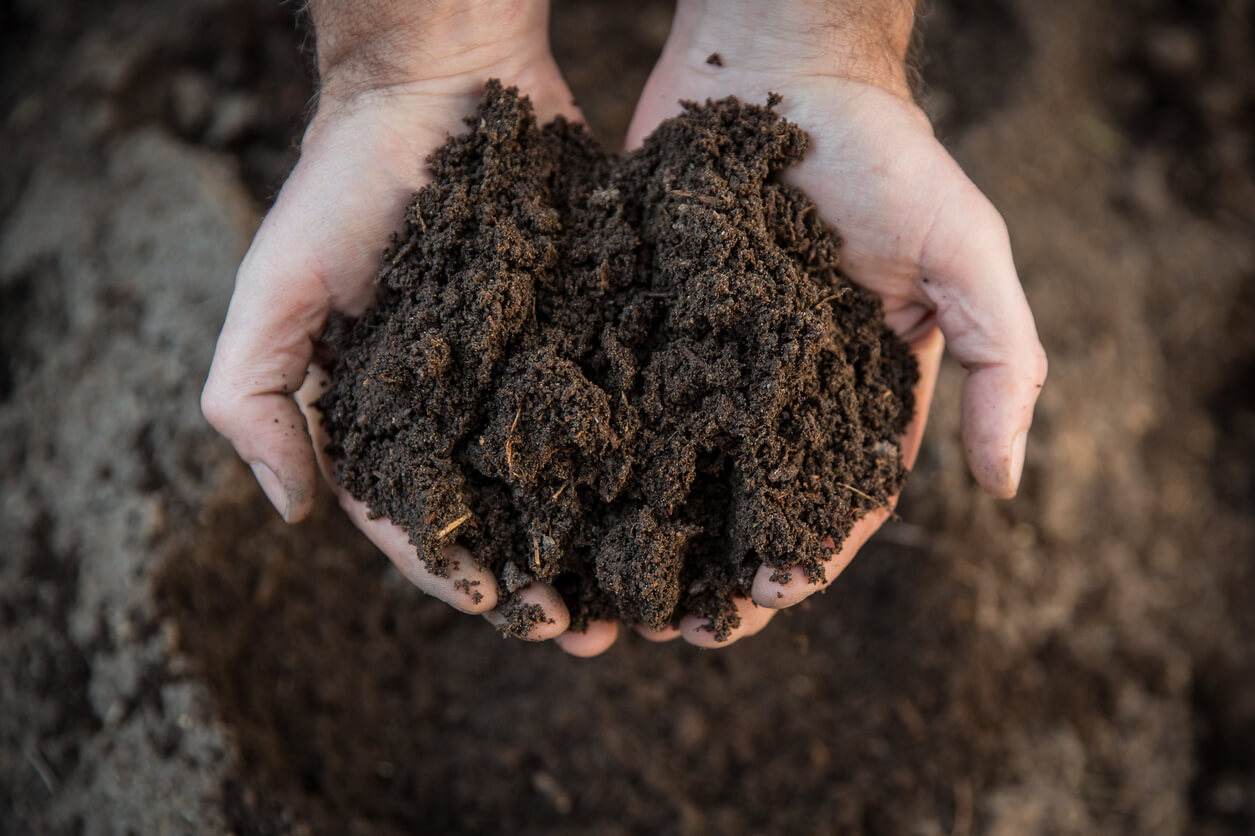 What is Organic Soil?