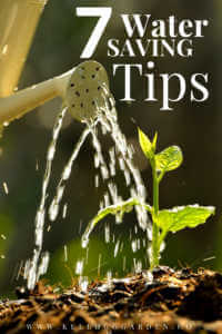 """Watering a sprouting plant, with text, """"7 water saving tips"""""""