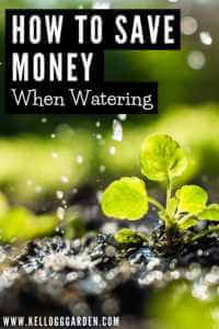 When and How to Water your Plants