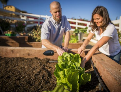 soil structure for healthy gardens