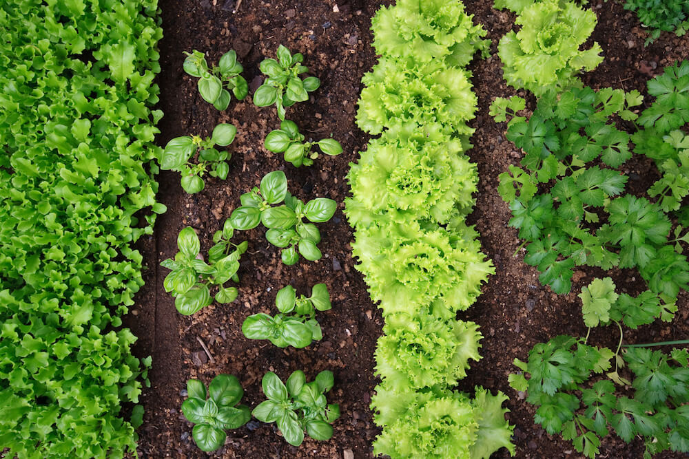 Top 20 Garden Vegetables To Grow Kellogg Garden Organics
