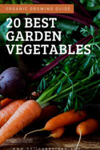 """Carrots and beets with text, """"20 best garden vegetables"""""""