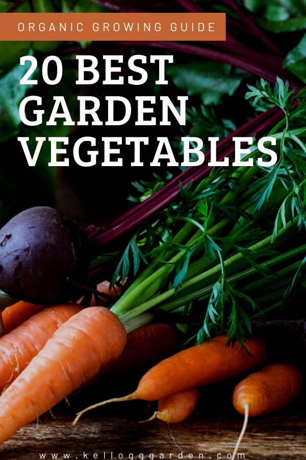 "Carrots and beets with text, ""20 best garden vegetables"""