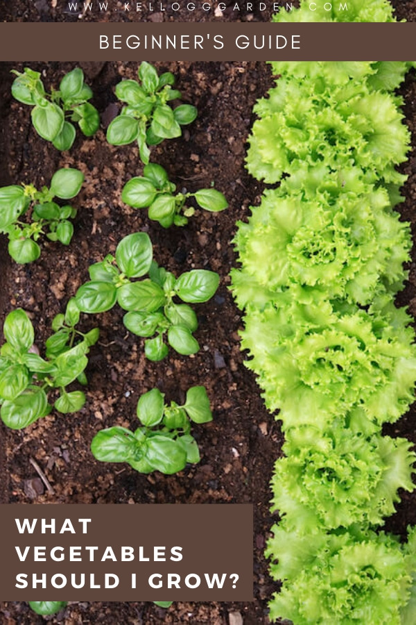 "Lettuce garden with text, ""What vegetables should I grow?"""