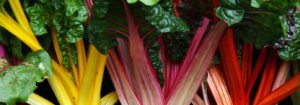 Swiss Chard to grow in your garden