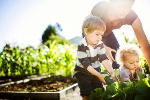 Midsummer harvesting and planting