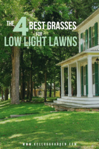4 best grasses for low light lawns text for Pinterest Image